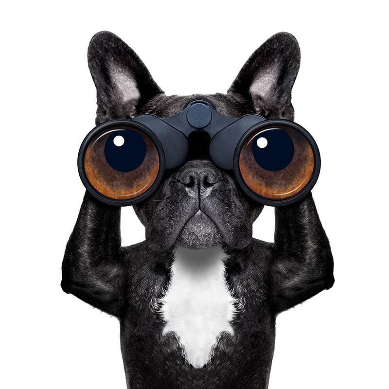 404 Seite - Ein Hunde mit Fernglas sucht eine Webseite